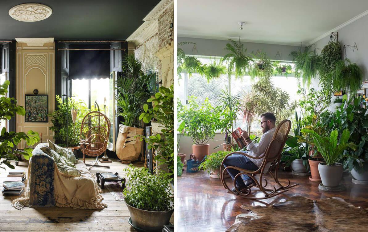 Jungle urbaine plantes d'intérieur
