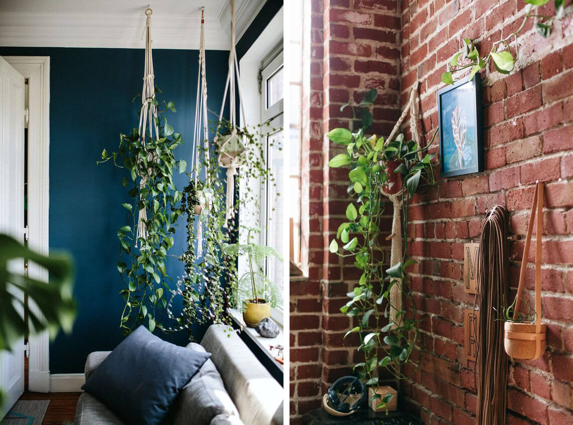 Plantes suspendues et mur végétal