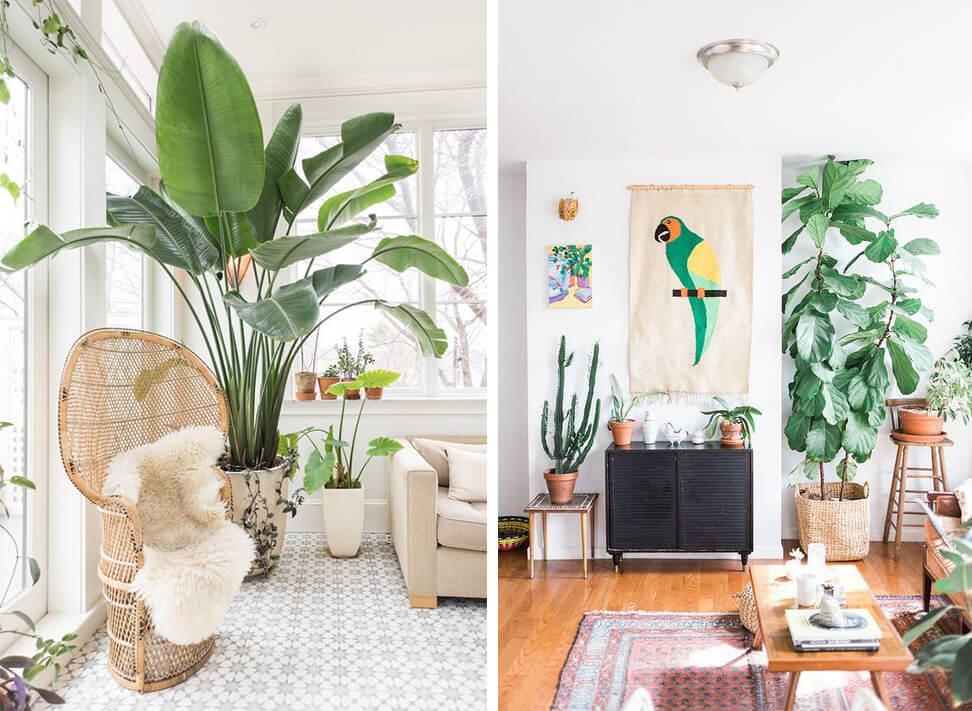 Plante géante dans le salon : ficus elastica et plantes tropicales