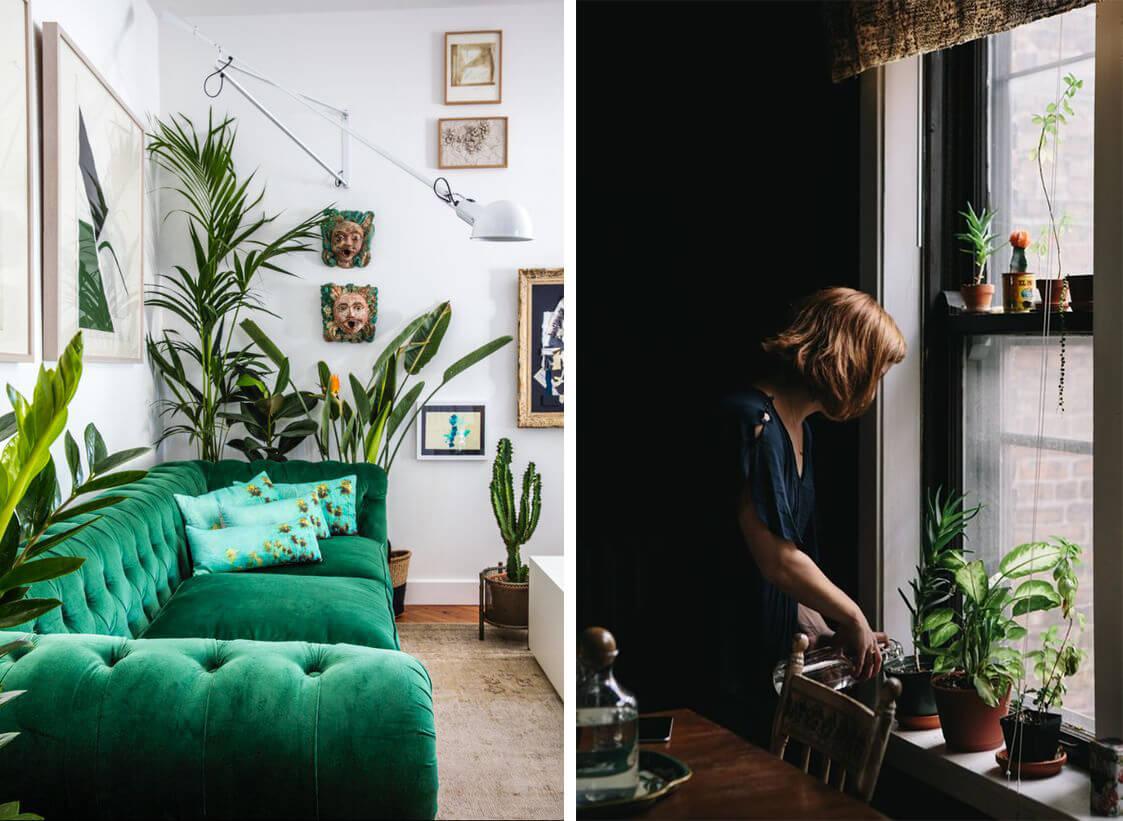 Plantes autour du canapé et sur le rebord de fenêtre