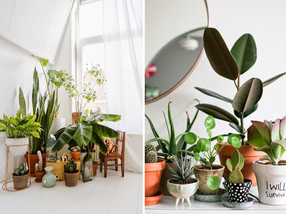 Plantes vertes d'intérieur regroupées