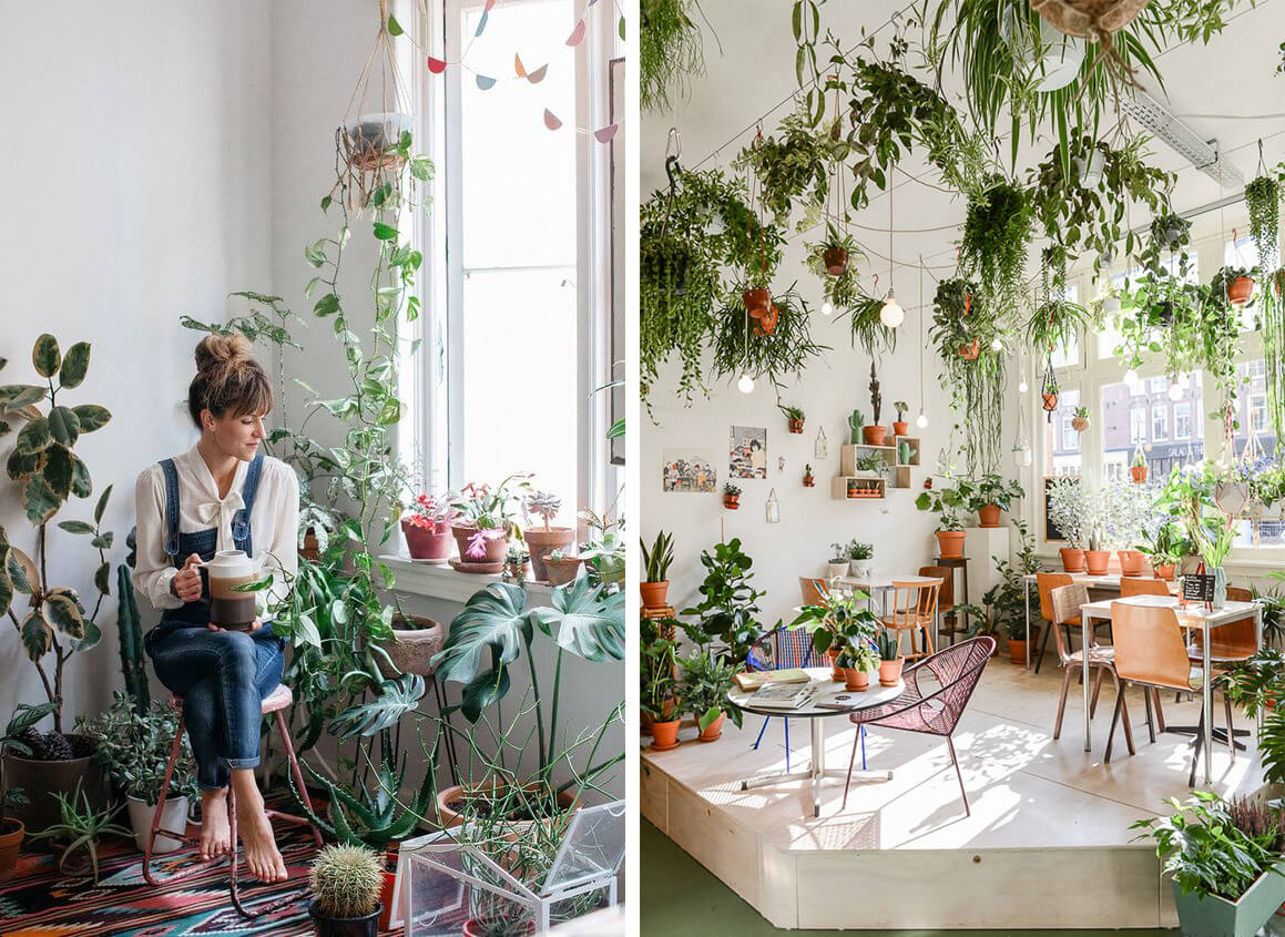 Plante interieur jungle urbaine