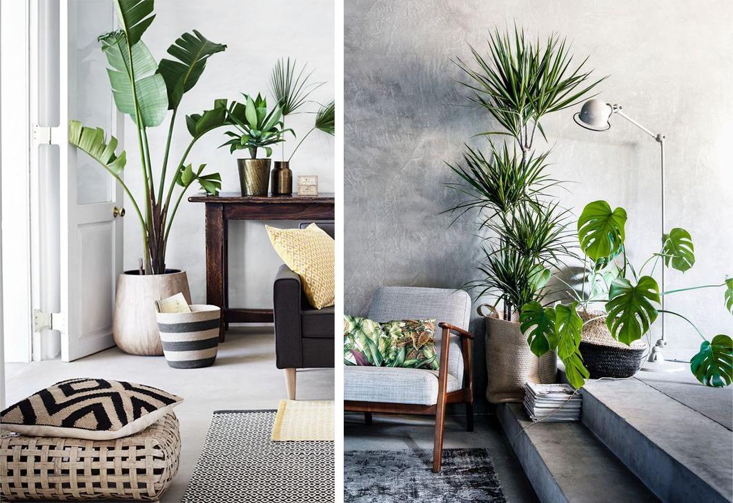 Décorer le salon avec des plantes vertes