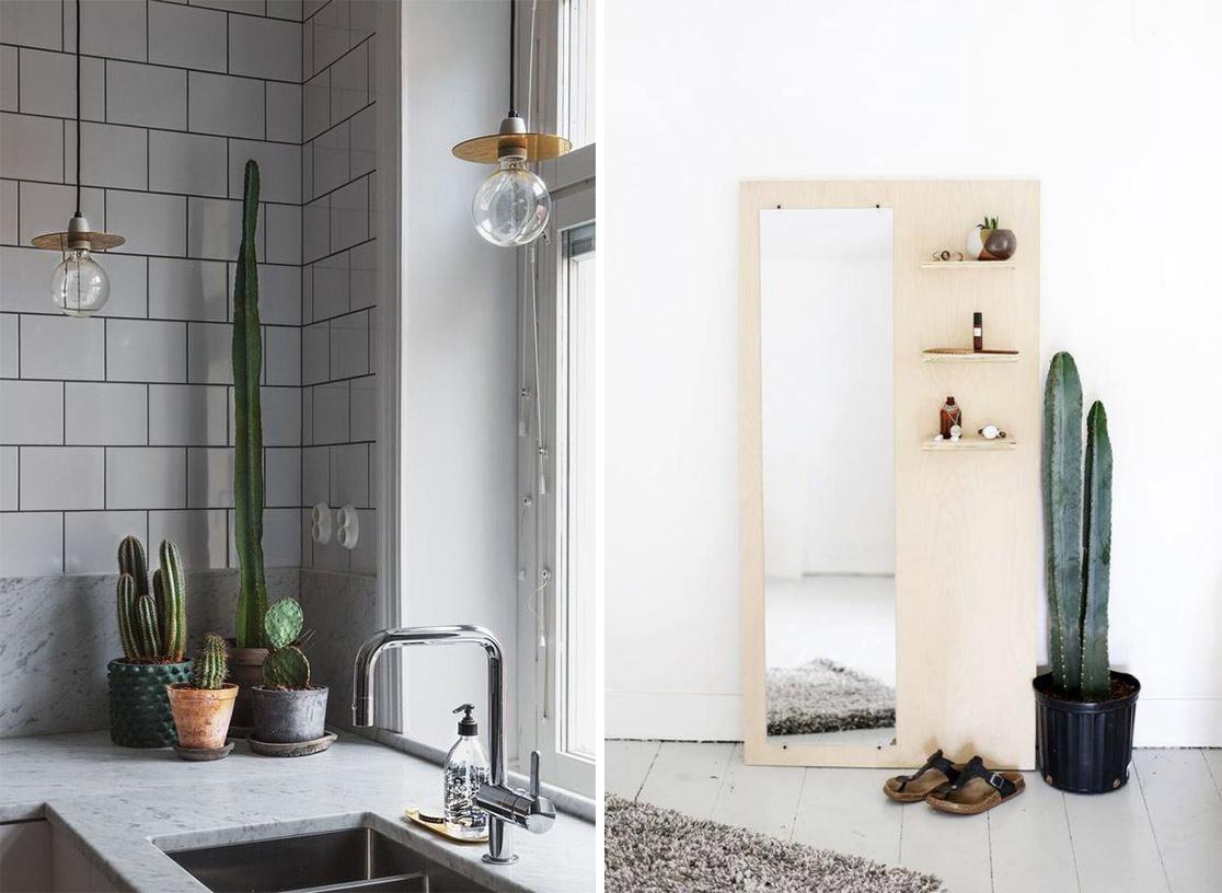 Cactus dans la cuisine ou dans l'entrée