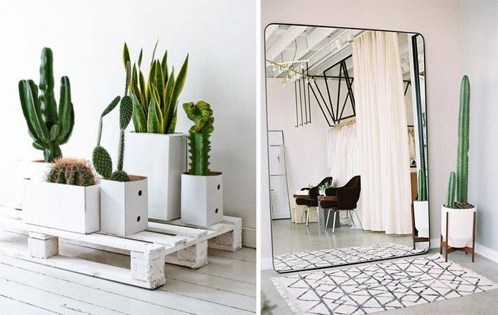 Cactus modernes et design