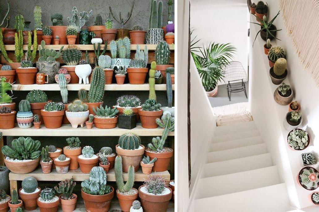 mini cactus petits pots décoration escaliers et étagères