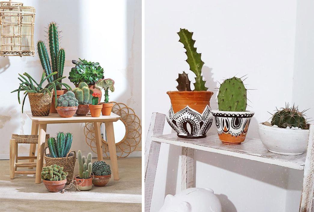 Petits cactus décoration intérieure