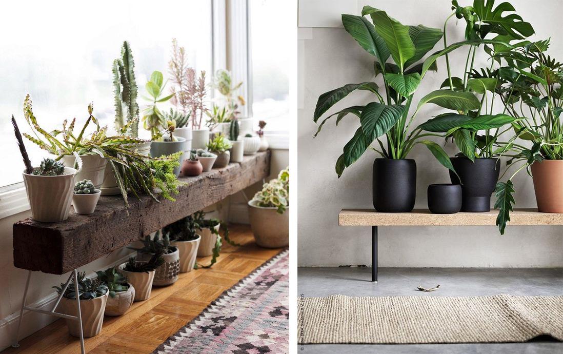 Plantes vertes sur un banc : déco vertes et urban jungle
