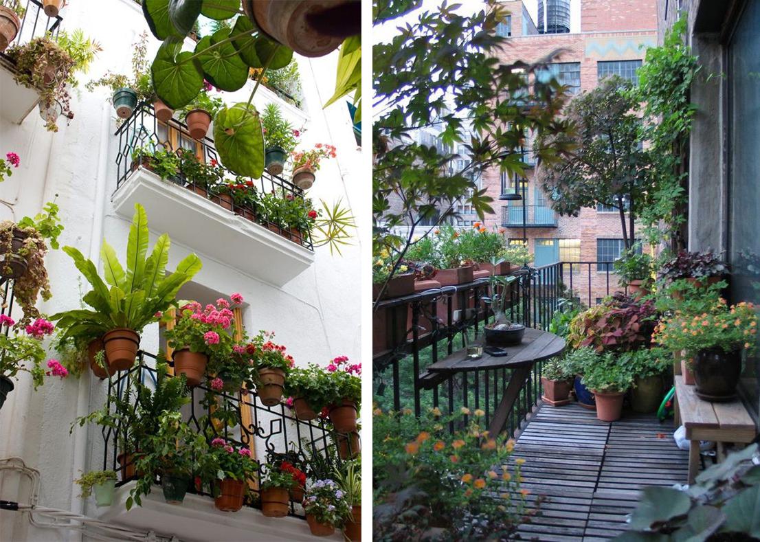 Balcons fleuris vus depuis la rue, urban jungle