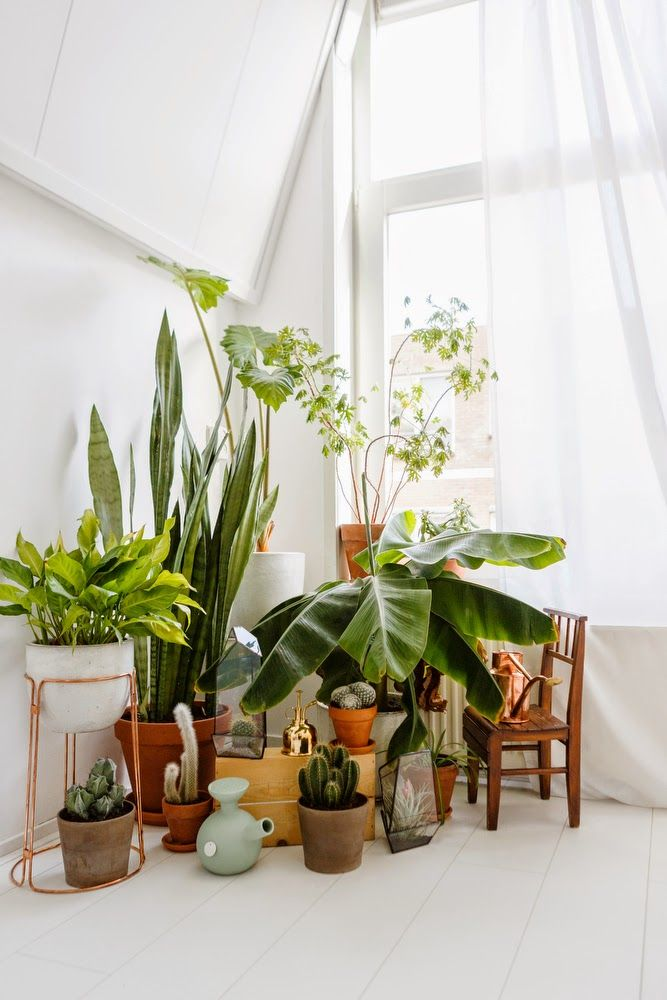 Urban jungle : des plantes dans la maison, ou comment aménager le coin d'une pièce avec des plantes.