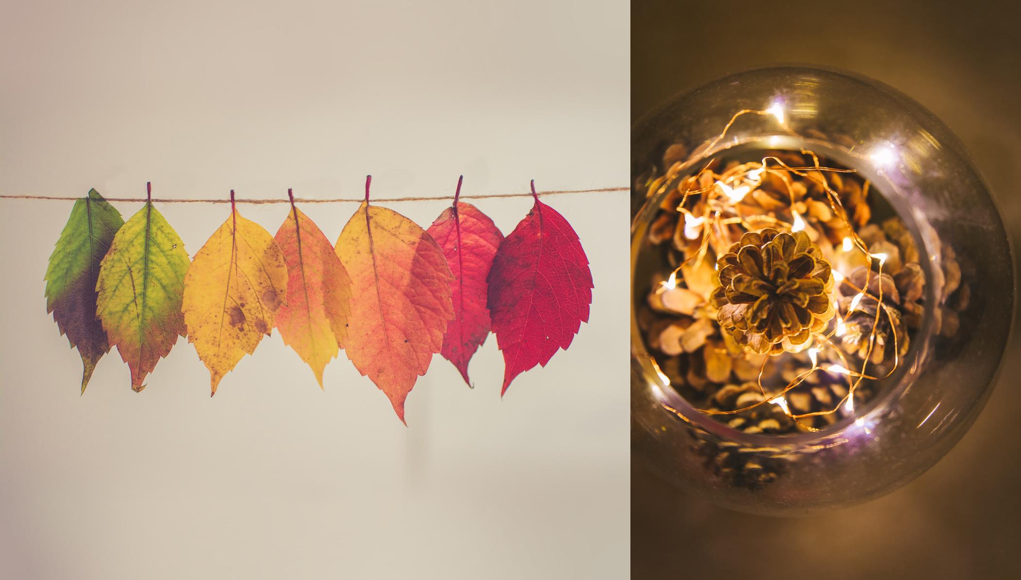 Décorer avec des feuilles et des pommes de pin