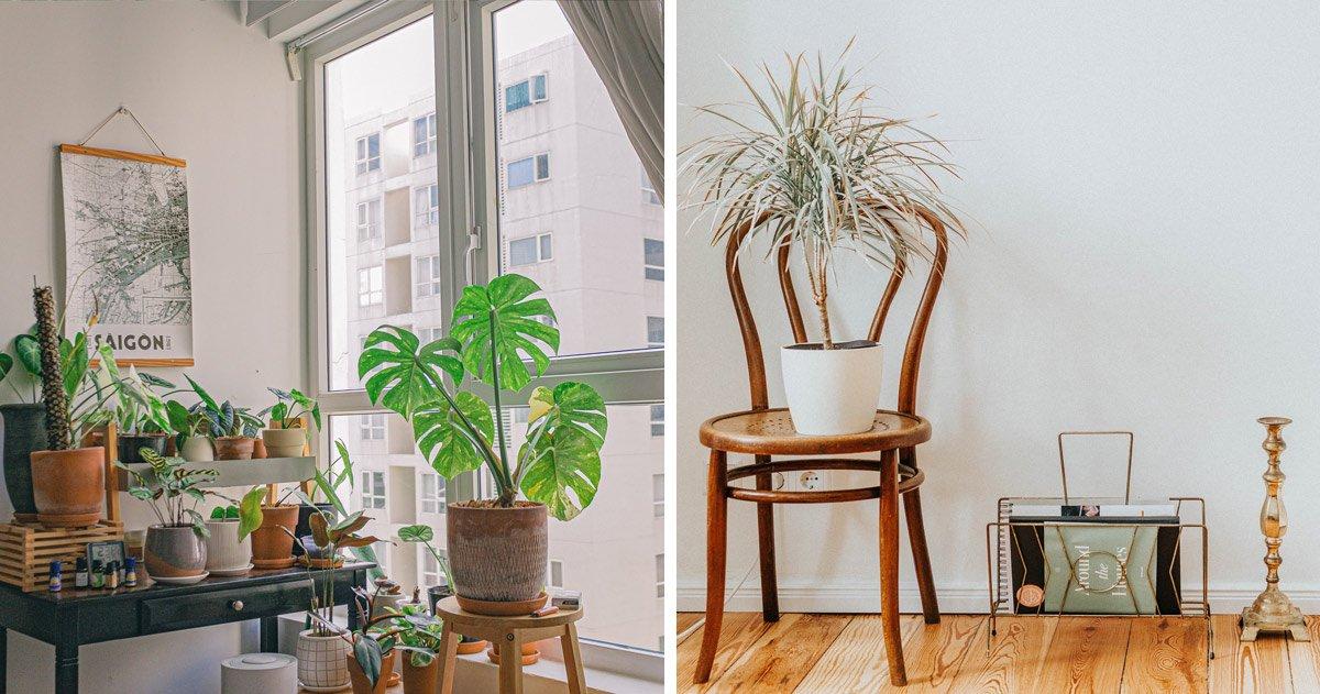 Plantes posées sur tabouret ou chaise bistrot déco originale