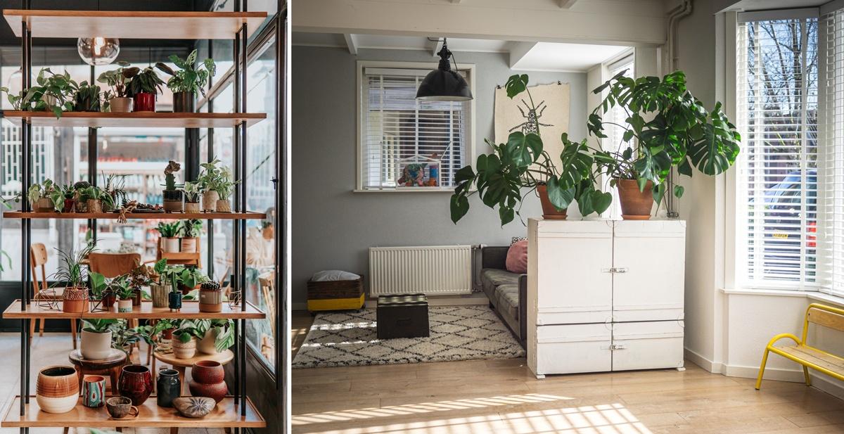 Plantes pour cloisonner et séparer des espaces de vie ou des pièces