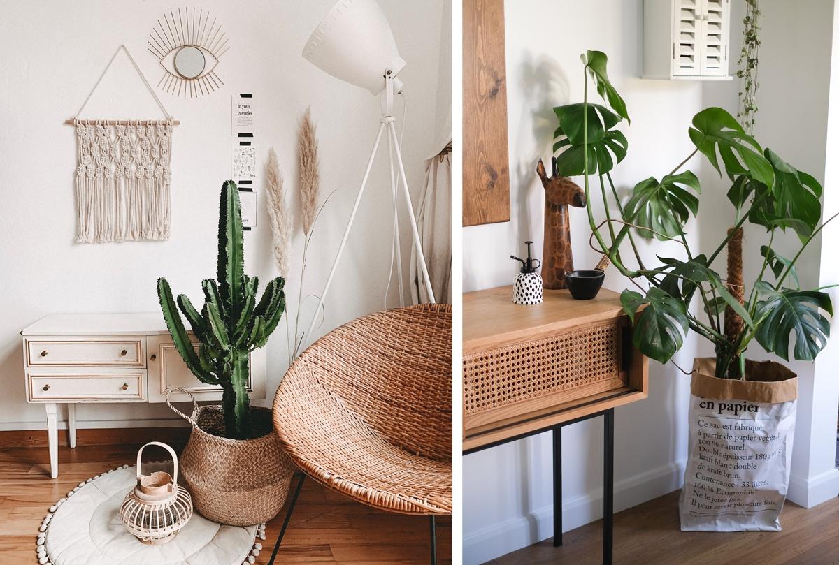 Plantes vertes dans des paniers en rotin ou en osier et cache-pot en sac en papier récup