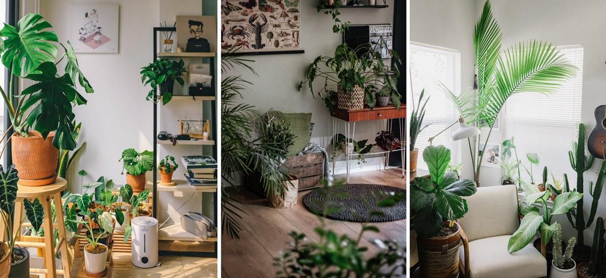 Plantes vertes dans une déco verte