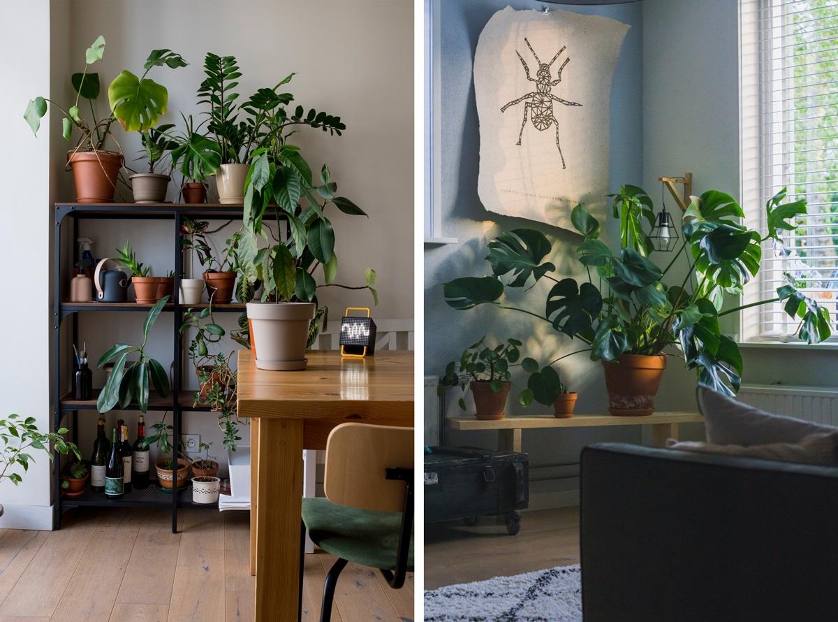 Plantes vertes pour atténuer le son dans la maison