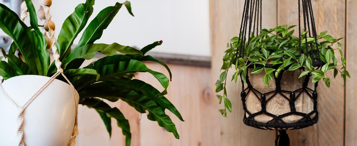 Plante suspension macramé design