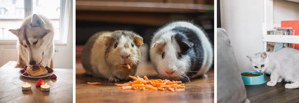 coin repas pour les animaux de la maison