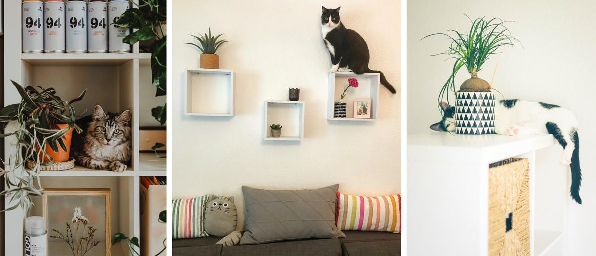 Des étagères en hauteur pour les chats grimpeurs