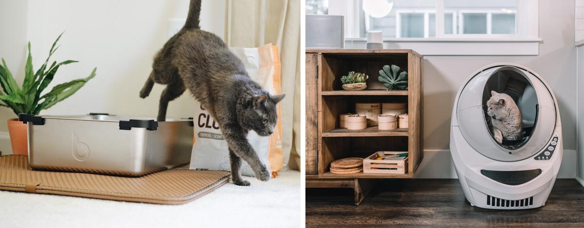 Litière pour chat appartement