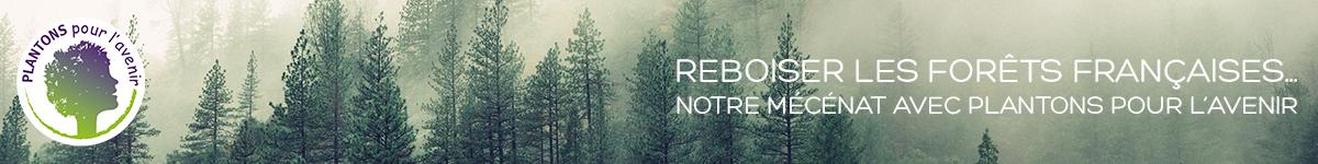 Plantons pour l'avenir : notre mécénat pour reboiser la forêt française